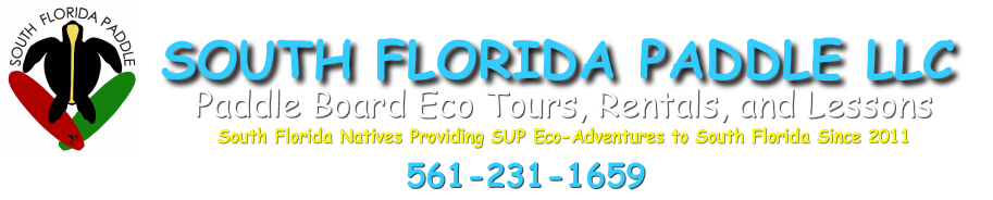 Experience a paddle board adventure with a master naturalist through the real South Florida around John d. MacArthur State Park